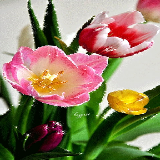Colored Tulip Sparkles LWP