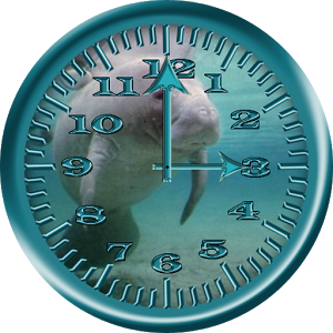 Manatee 4 Analog Clock