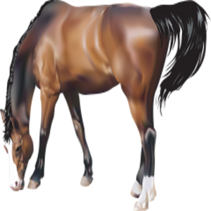 Horses True Or False Game